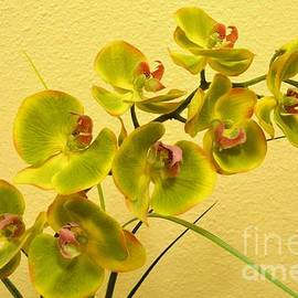 Mary Deal - Green Orchids on Gold