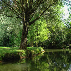 Green Reflections by Cristina Stefan