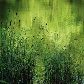 Kathy Carlson - Green Reflections