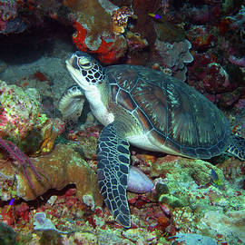 Green Sea Turtle 7 by Pauline Walsh Jacobson