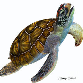 Green Sea Turtle Profile by Corey Ford