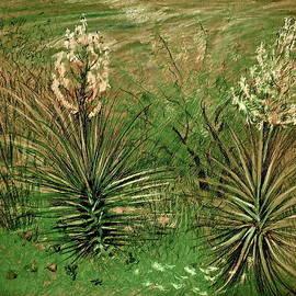 Bonnie See - Green Yucca