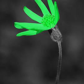 Green9 by Shane Bechler