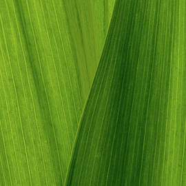 Greens of Spring II by Ira Marcus