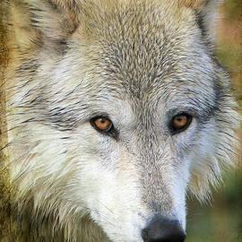 Athena Mckinzie - Grey Wolf Texture