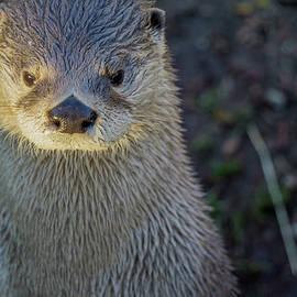 Linda Howes - Grey River Otter