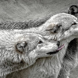 Wes and Dotty Weber - Grey Wolves