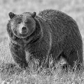 Scott Warner - Brutus the Bear