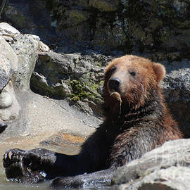 DejaVu Designs - Grizzlies Snacking on Things They Find in a River