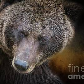 Eva Lechner - Grizzly Bear Portrait
