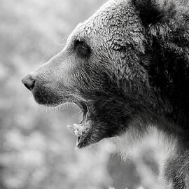 Athena Mckinzie - Grizzly Growl Black and White