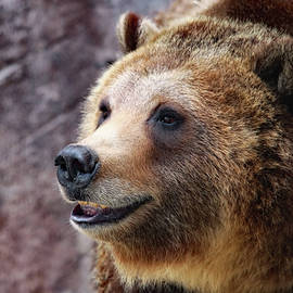 Grizzly Smile by Elaine Malott