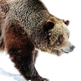 Athena Mckinzie - Grizzly Walk About