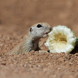 Ground Squirrel with lunch by Ruth Jolly