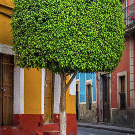 Guanajuato Tree by Inge Johnsson