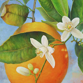 Guirlande Orange by Muriel Dolemieux