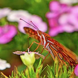 George Bostian - Gulf Flittery Butterfly 008