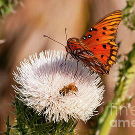 Bob Phillips - Gulf Fritillary Butterfly with Bee