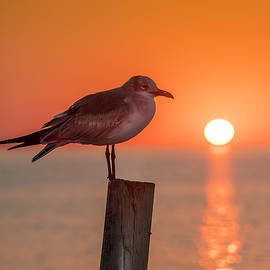 Marvin Spates - Gull And Sunset