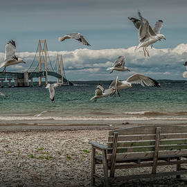 Randall Nyhof - Gulls Flying by the Mackinac Bridge at the Straits with Park Bench