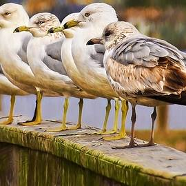 Gulls In A Row by Alice Gipson