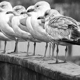 Gulls In A Row BlackandWhite by Alice Gipson