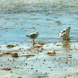Chris Armytage - Gulls on the Edge