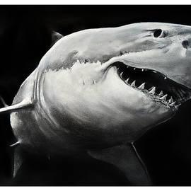 Gw Shark by William Underwood