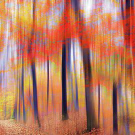A Luminous Landscape by Jessica Jenney