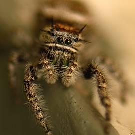 Sherry Pratt - Hairy Spider