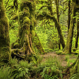 Hall of Mosses - Olympic National Park by T-S Photo Art