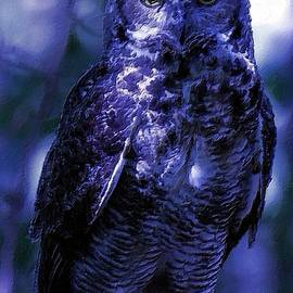 Owl with the Blues by Femina Photo Art By Maggie