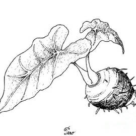 Iam Nee - Hand Drawn of Taro Roots on White Background