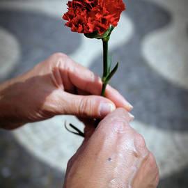 Hands and Carnation - Carlos Caetano