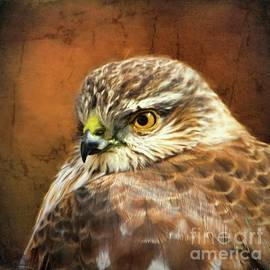 Tina LeCour - Handsome Hawk