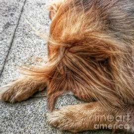 Hannah. #dogs #gsd #germanshepherd
