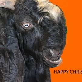 Anand Swaroop Manchiraju - Happy Christmas-2