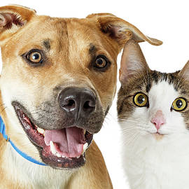Happy Crossbreed Cat and Dog Together - Susan Schmitz
