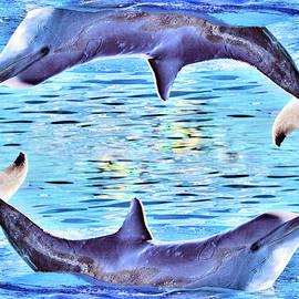 Andy Za - Happy dolphins.
