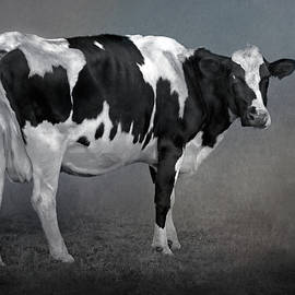 HH Photography of Florida - Happy Holstein