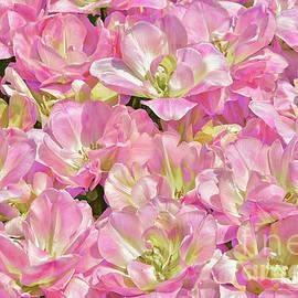 Regina Geoghan - Happy Upstar Tulips