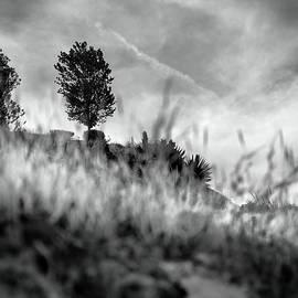 Guido Montanes Castillo - Happy Valley