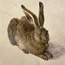 Hare by Albrecht Durer