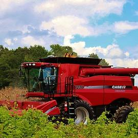Harvest Time by Cynthia Guinn