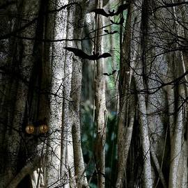 Diann Fisher - Haunted Forest