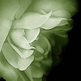 Haunting Rose Flower Green by Jennie Marie Schell