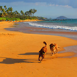 Michael Rucker - Hawaiian Beach Dogs