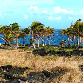Jonathan Wong - Hawaiian Palm Trees