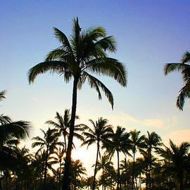 Michael Rucker - Hawaiian Palm trees