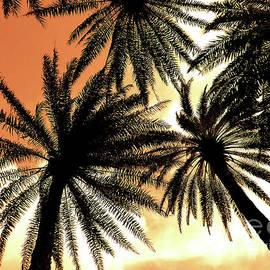 Hawaiian Palm Trees Nbr.1 by Scott Cameron